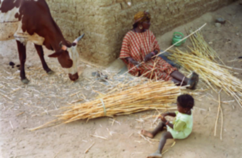 A l'ombre d'un mur, Rakia élague des cannes de mil, sa petite-fille joue avec les miettes qu'une vache broute de son côté. Bosseye Dogabe, Burkina Faso, mai 2008.