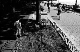 Promenade au bord de l'eau à Battery Park : planté dans un carré de gazon, un petit panneau rond représente une silhouette de chien et explique : Dog urine damages plants. New York, juin 2003.