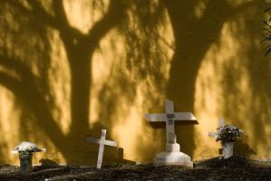 Croix blanches au pied d'un mur jaune ombragé par des arbres dans un cimetière. Ténérife, Canaries, janvier 2010.