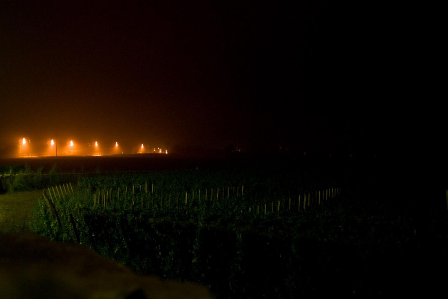 Les vignes de nuit, et au fond un alignement de lumières oranges de réverbères qui se fondent dans la brume. Chassagne-Montrachet, Bourgogne, septembre 2009.